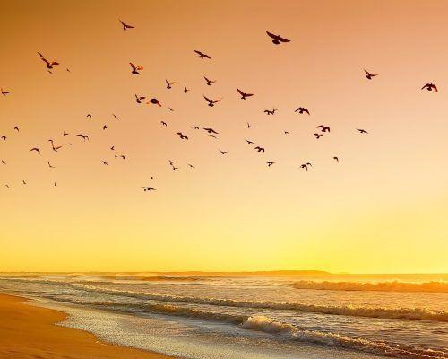 gold-coast-holiday-accommodation-8